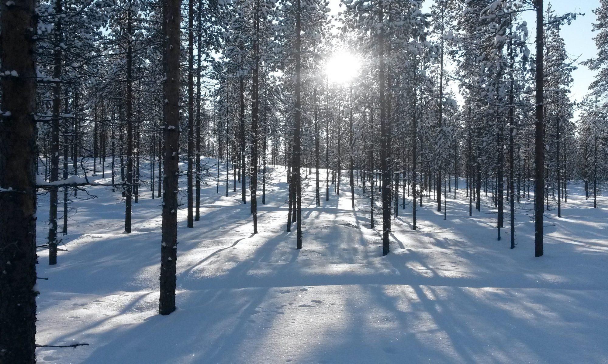 Lauttijärven metsästysseura